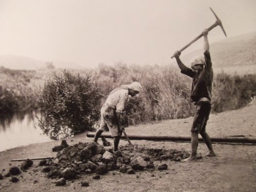 Draining the swamps of Yagur, 1930s