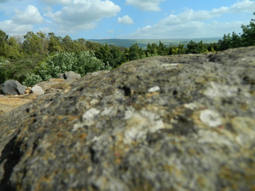 Lichen-covered rock and the green beyond