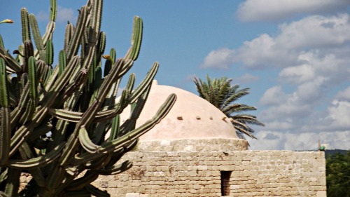 Cactus and mosque