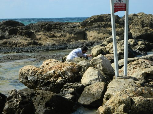 Crouching in the tide pools