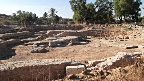 Basilica excavations