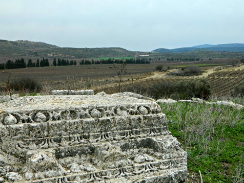 Roman temple ruins and grapevines