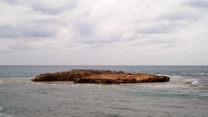 Cool little island flocked with seabirds