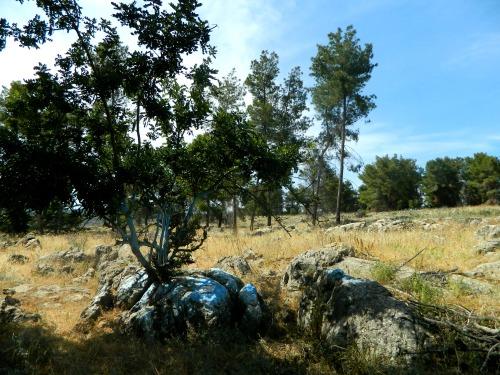 Grave of Brei d'Rav Safra