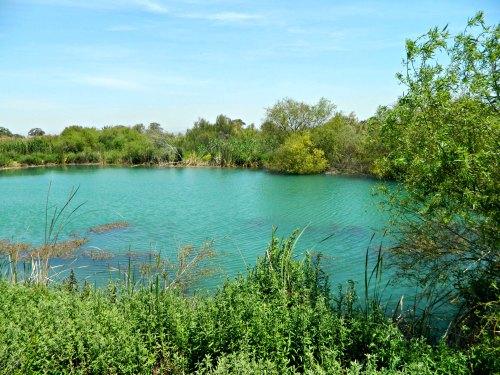 The Moorhen Pool