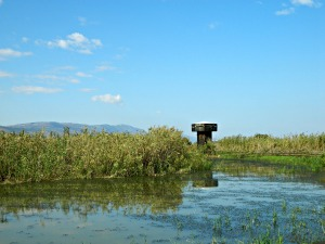 Hula Valley observation tower