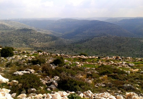 Historically rich hills of the Shomron - looking south
