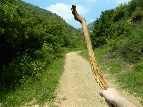 My hefty stick for defense against wild boars