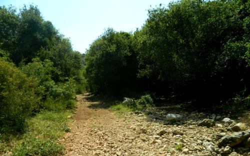 The trail crossing with a dry Nachal Ga'aton