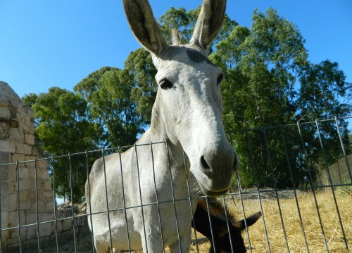 Friendly donkeys at the Qa'sar farm
