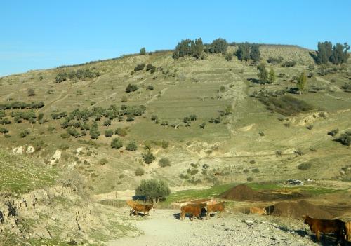 Trail outside Jish (Gush Halav)