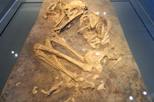 Burial of a woman and dog (cast) from the Hula Valley