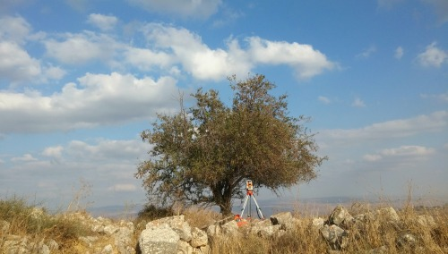 RTK surveyor under the bitter almond tree