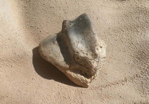 What appears to be a scorched sheep knee-bone