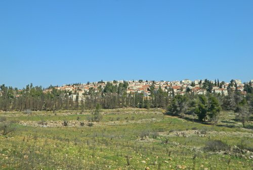 Ramot Forest with Ramot in the background