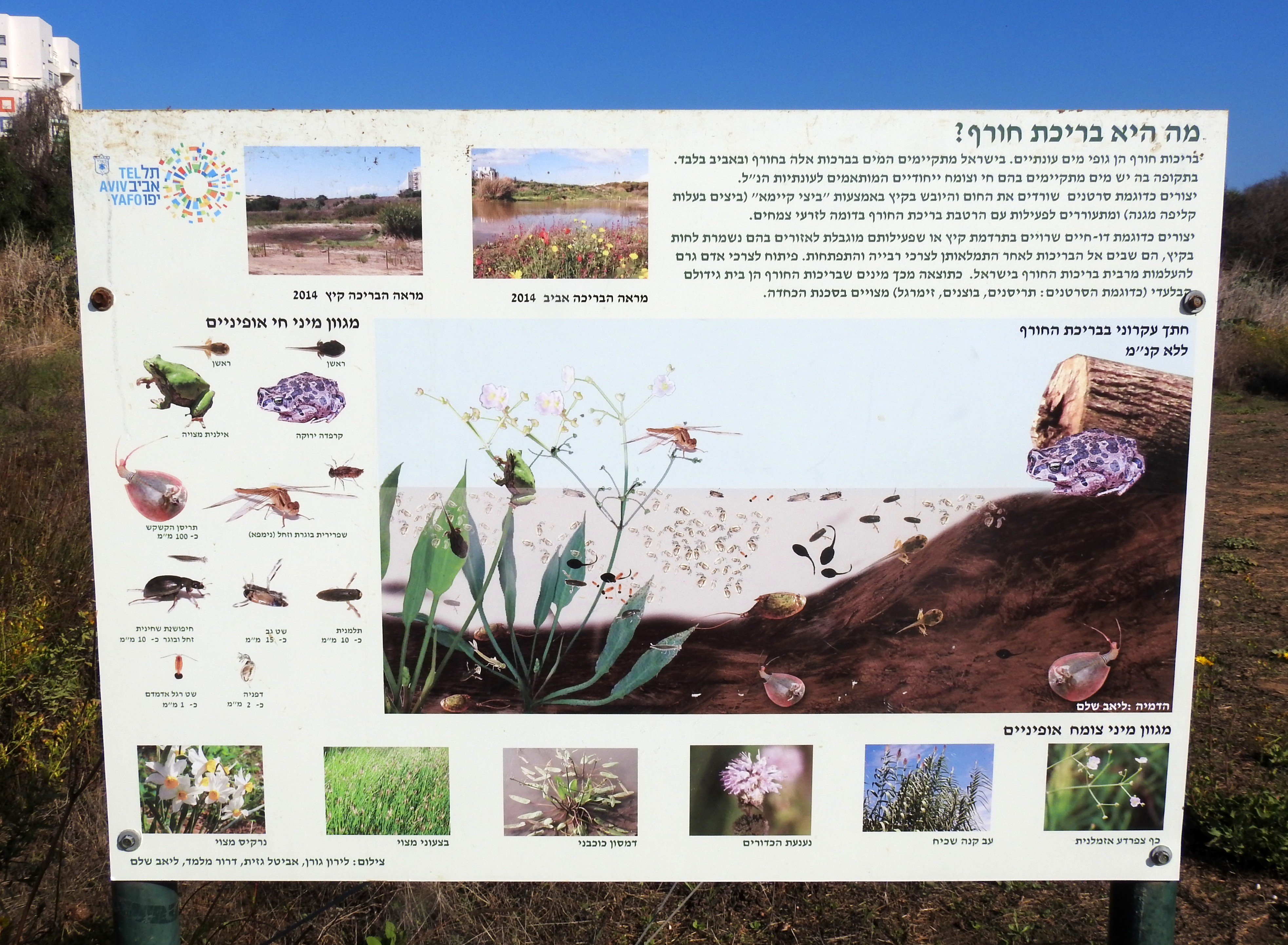 All about vernal pools
