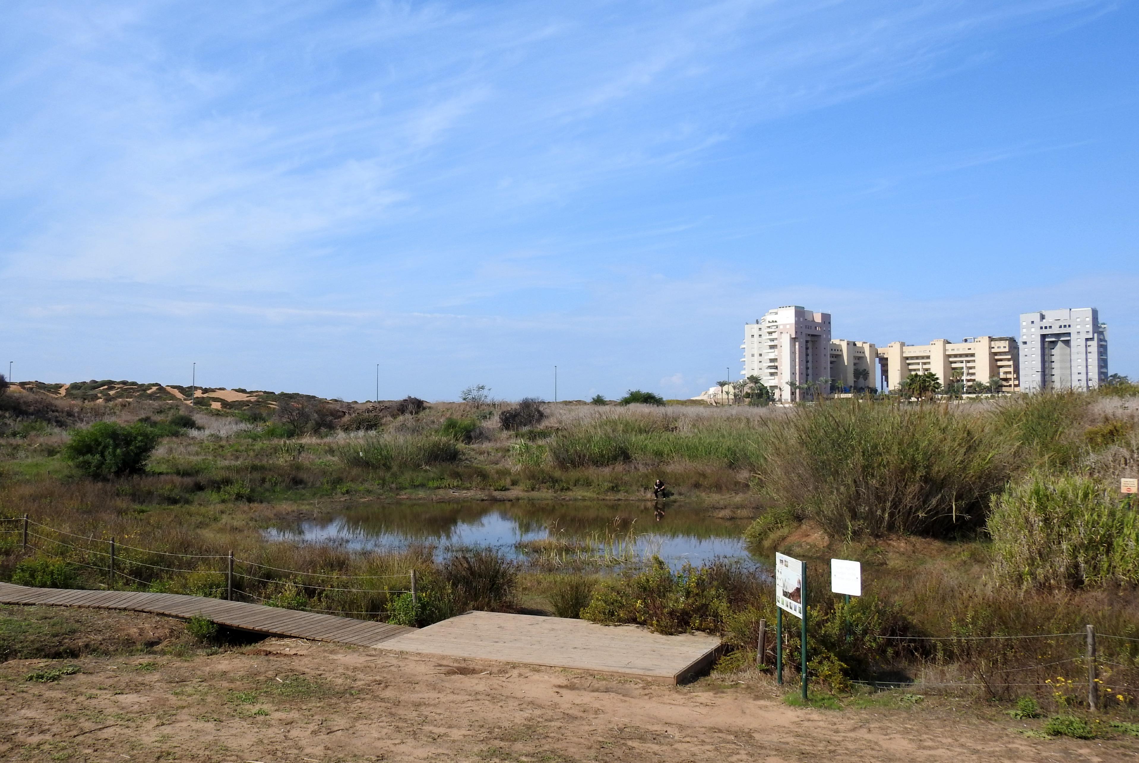 Levinsky College's vernal pool