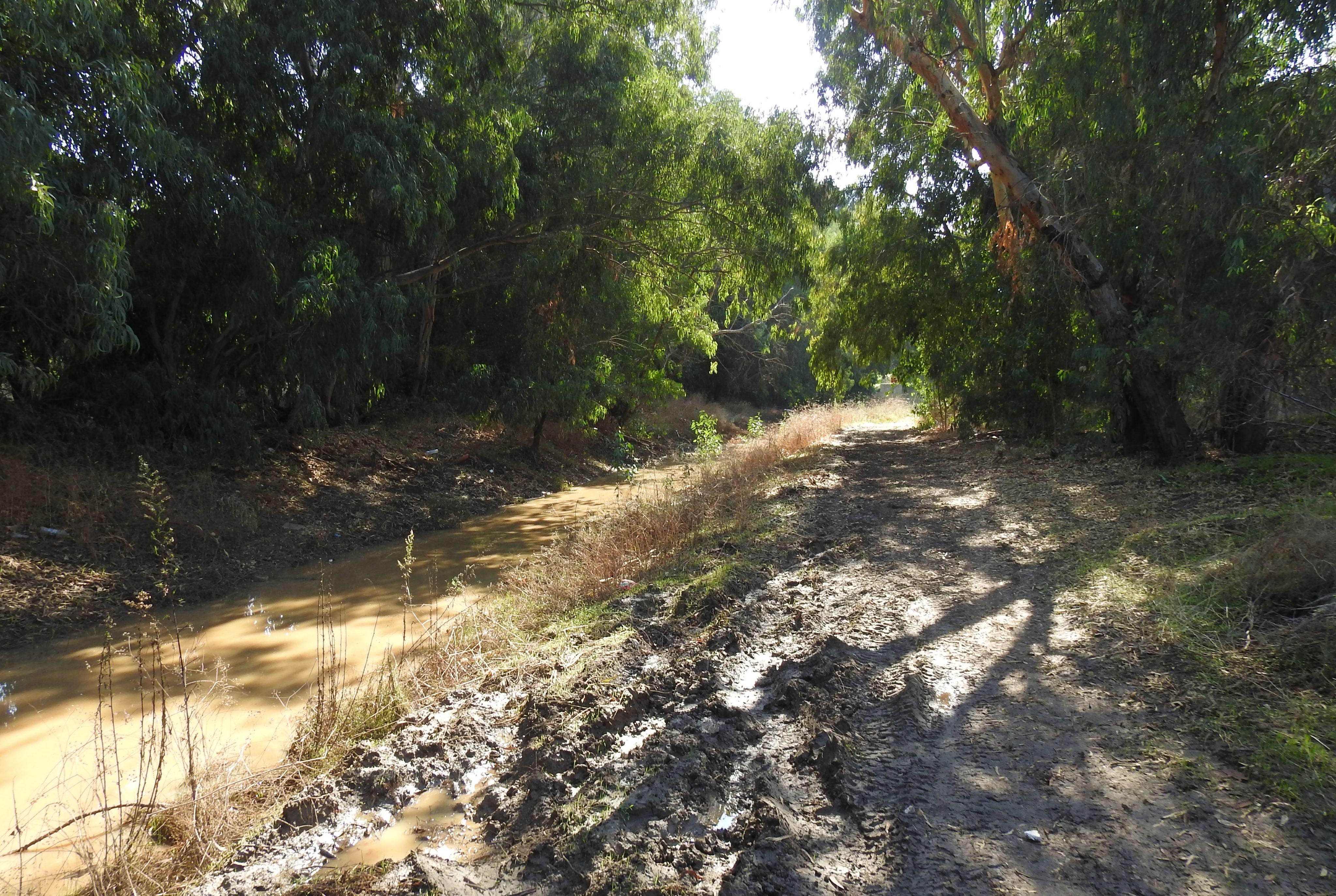 Muddy path along Nachal Achiya