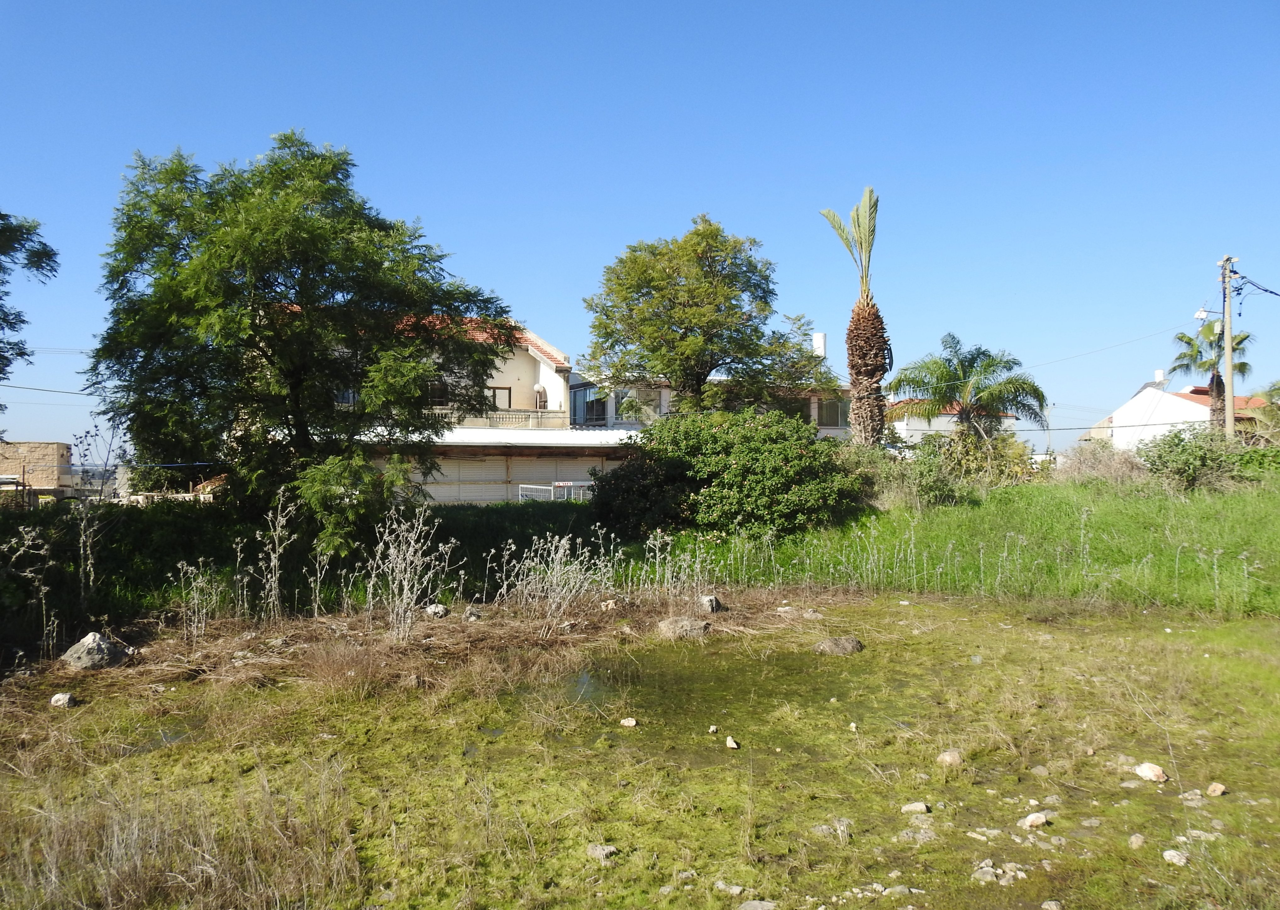Neglected vernal pool in Rosh HaAyin