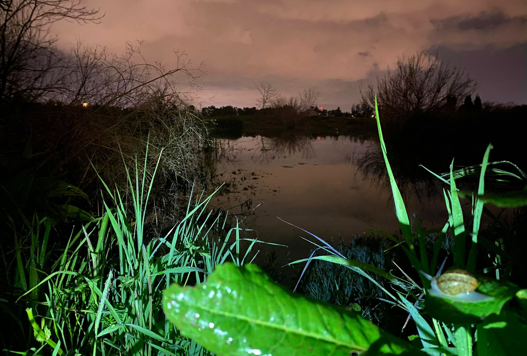 Neve Gan's vernal pool at night (photo Oren Auster)