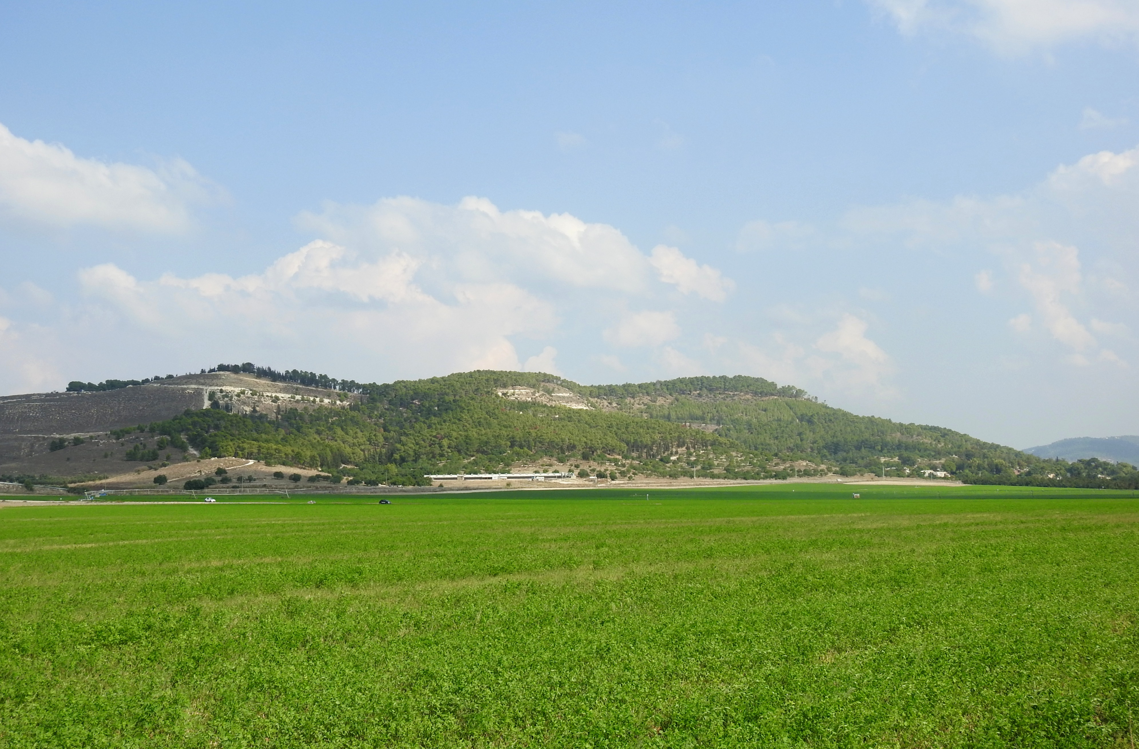 The lush green fields of Tzora