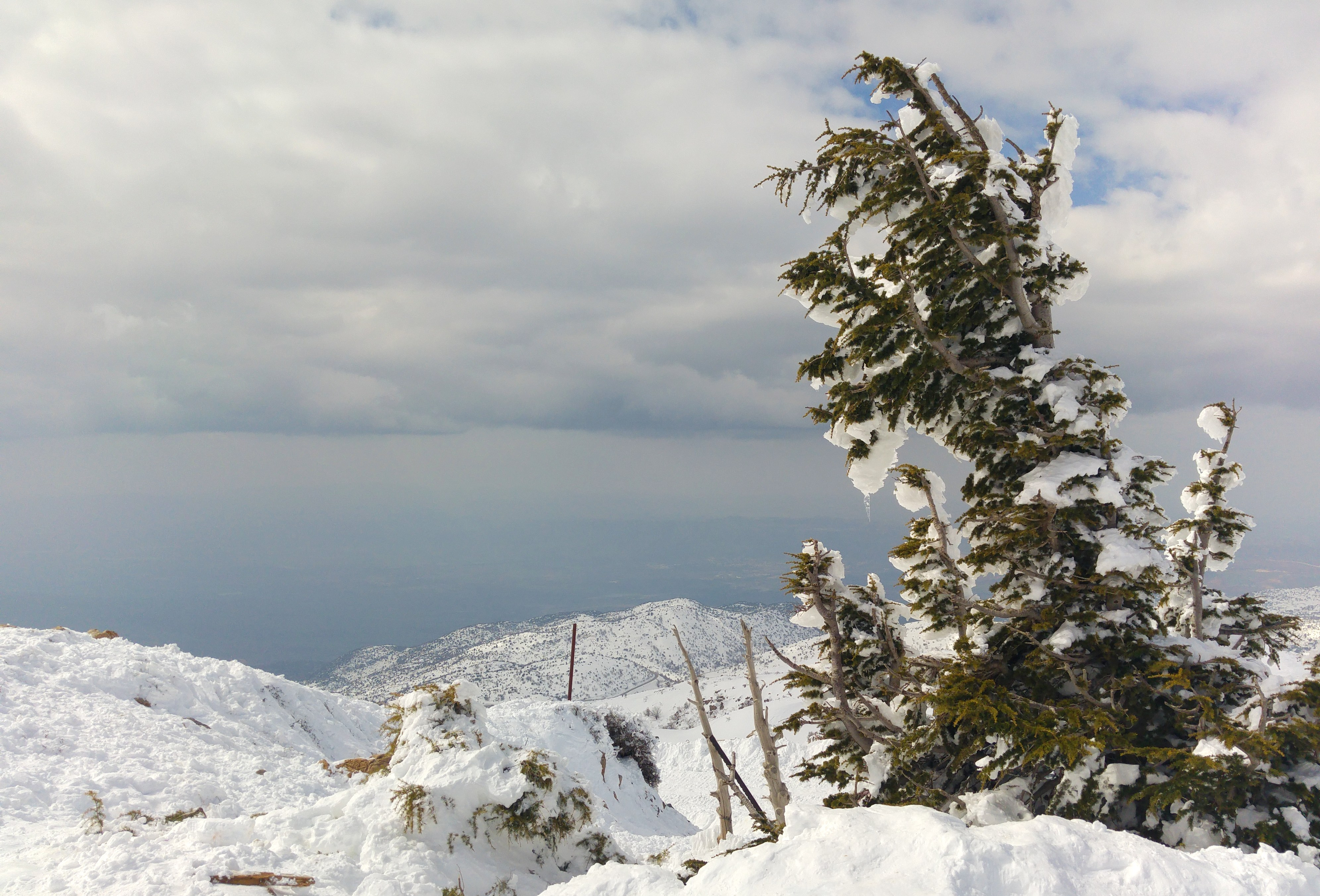 Nothing like an icy pine tree to symbolise winter