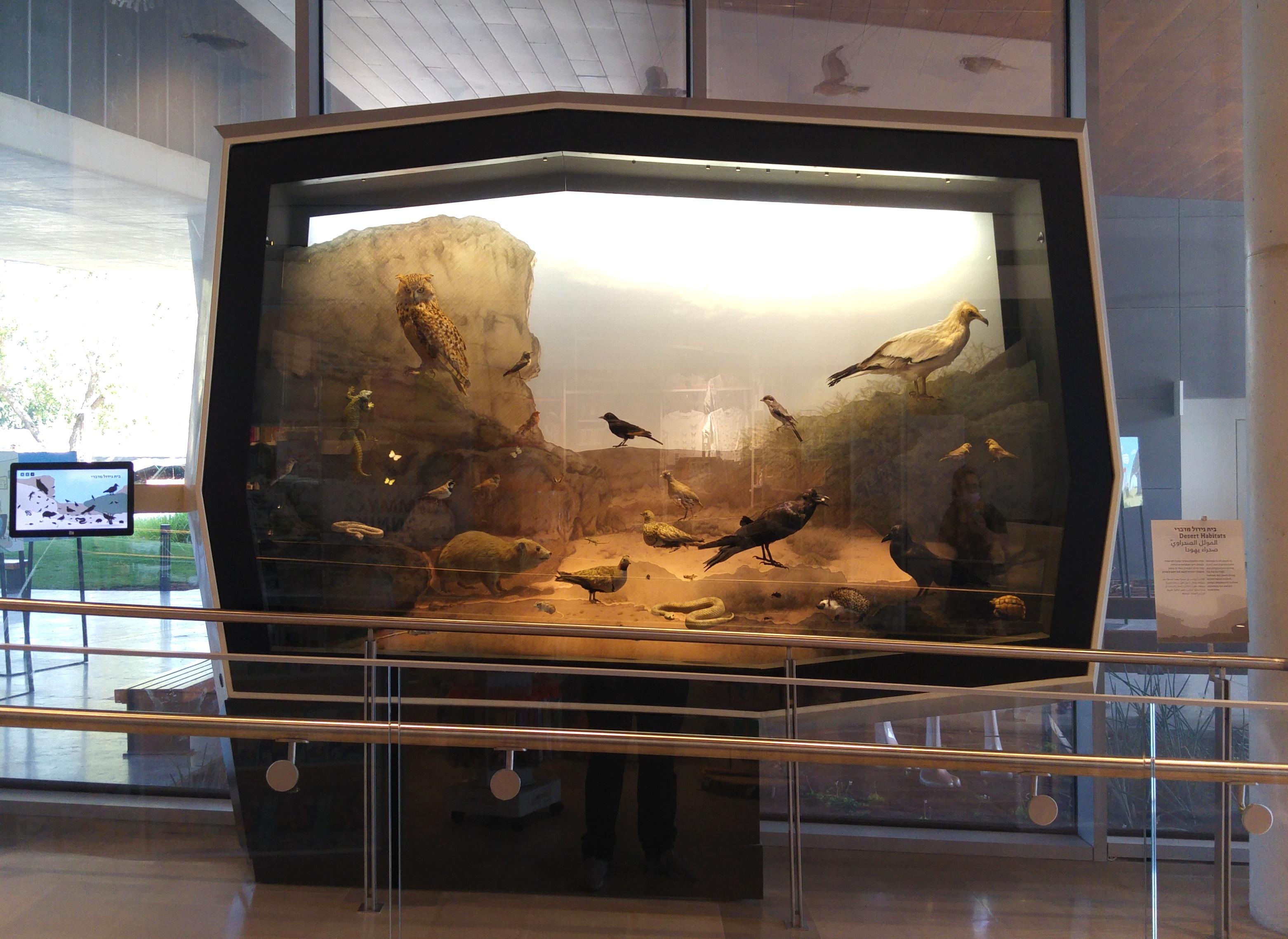 Desert habitat diorama