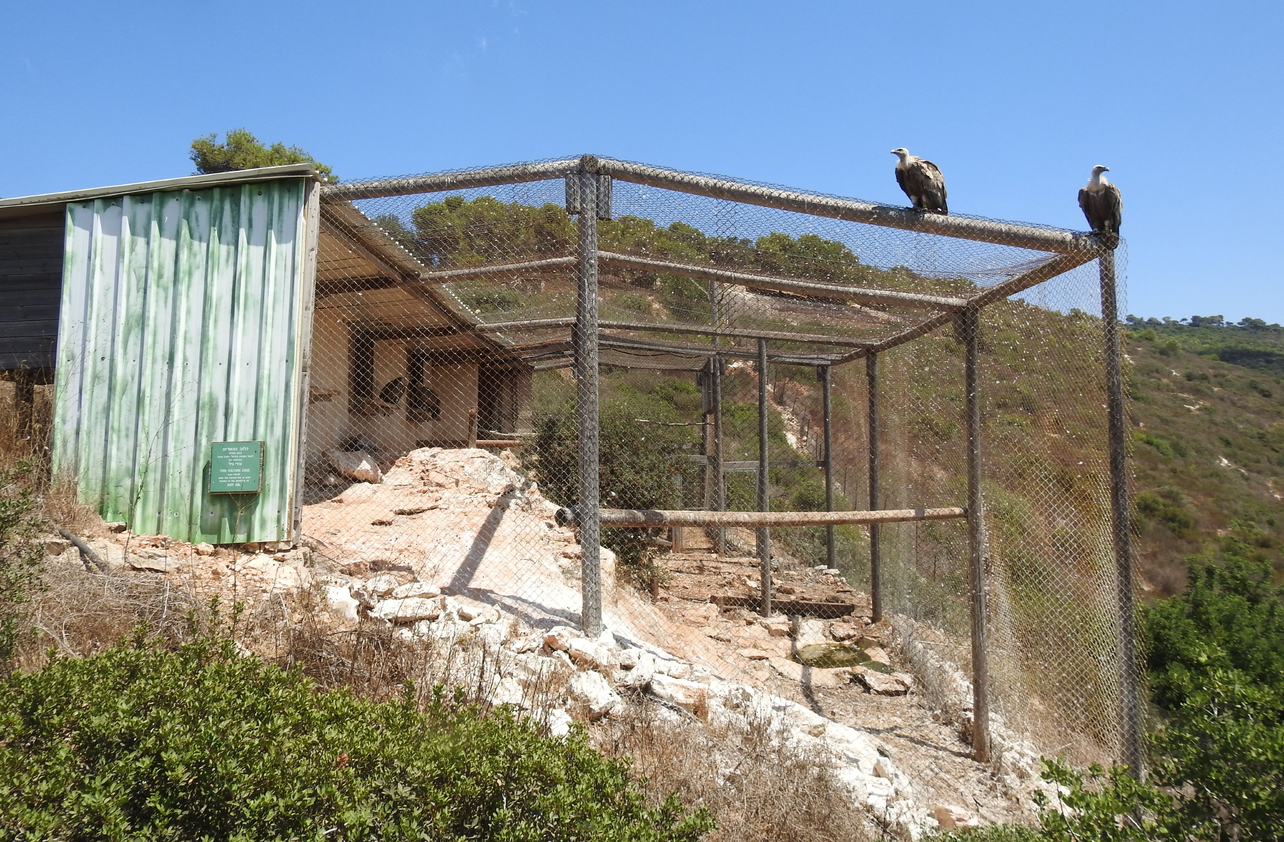 The vulture cage